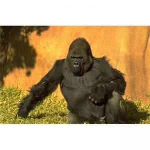 SEO Gorilla