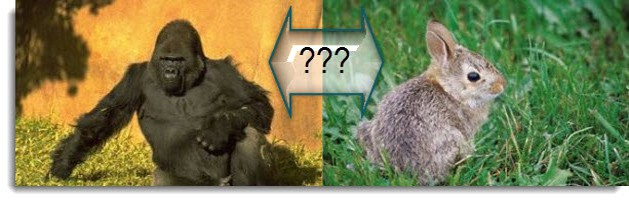Gorilla or Rabbit?